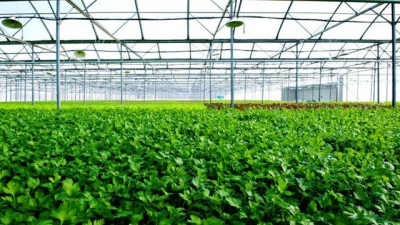 Vingroup building largest-ever greenhouse