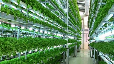Vietnam attracting Japanese high-tech agriculture enterprises