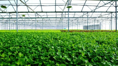 Vingroup to boost hi-tech agriculture in Quang Ninh