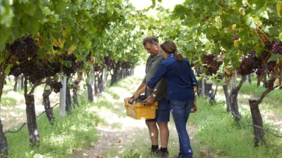 Australian grape growers to visit Vietnam