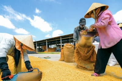 VET conference seeks solutions to boosting rice exports