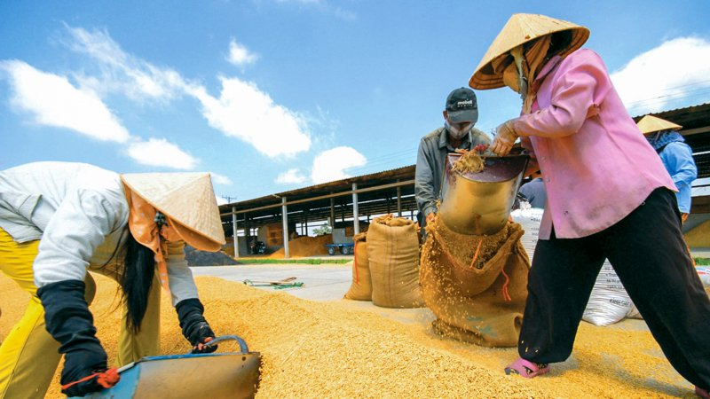 Agriculture sector posts 11M trade surplus of $8.8bn